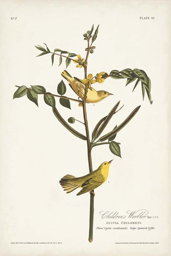 Pl. 35 Children's Warbler art print by John James Audubon for $60.00 CAD