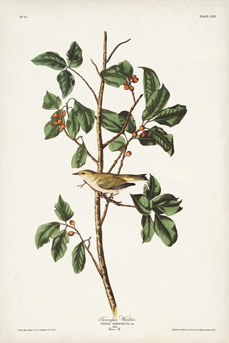 Pl. 154 Tennessee Warbler art print by John James Audubon for $60.00 CAD
