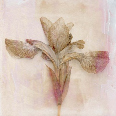 Remembered Flowers I art print by Judy Stalus for $53.75 CAD