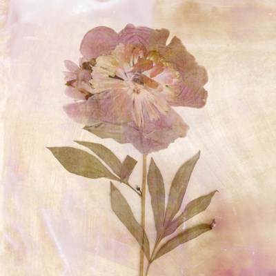 Remembered Flowers II art print by Judy Stalus for $53.75 CAD