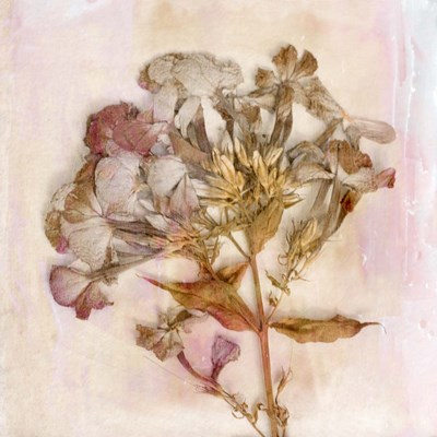 Remembered Flowers III art print by Judy Stalus for $53.75 CAD