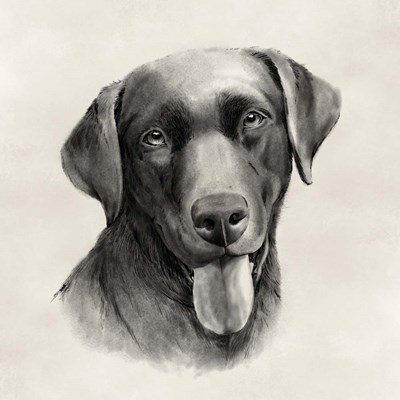 Charcoal Labrador I art print by Grace Popp for $68.75 CAD