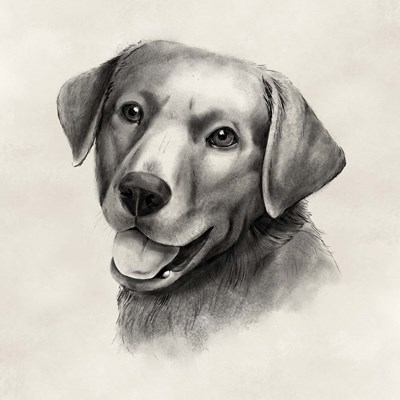 Charcoal Labrador II art print by Grace Popp for $32.50 CAD