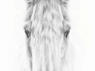 Black and White Horse Portrait IV art print by PHBurchett for $63.75 CAD