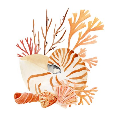 Nautilus Grouping I art print by Annie Warren for $53.75 CAD