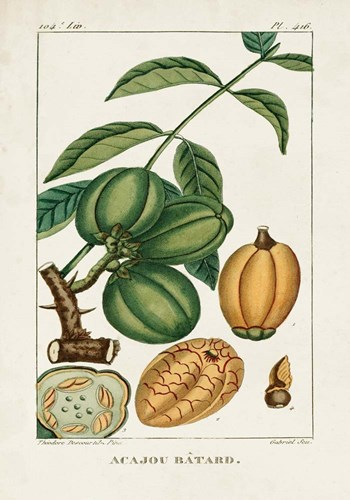 Turpin Foliage & Fruit IV art print by Pierre Jean Francois Turpin for $61.25 CAD