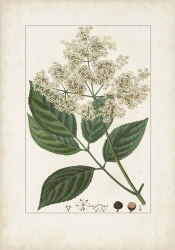 Antique Turpin Botanical V art print by Pierre Jean Francois Turpin for $102.50 CAD