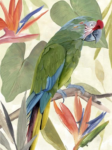 Tropical Parrot Composition I art print by Annie Warren for $38.75 CAD