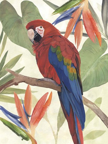 Tropical Parrot Composition II art print by Annie Warren for $38.75 CAD