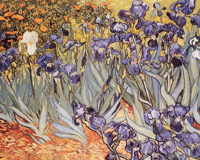 Irises in the Garden, Saint-Remy, c.1889 art print by Vincent Van Gogh for $25.00 CAD