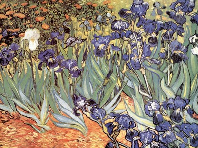 Irises in the Garden, Saint-Remy, c.1889 art print by Vincent Van Gogh for $95.00 CAD