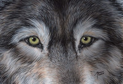 Eyes of the Wolf art print by Marilyn Barkhouse for $12.50 CAD