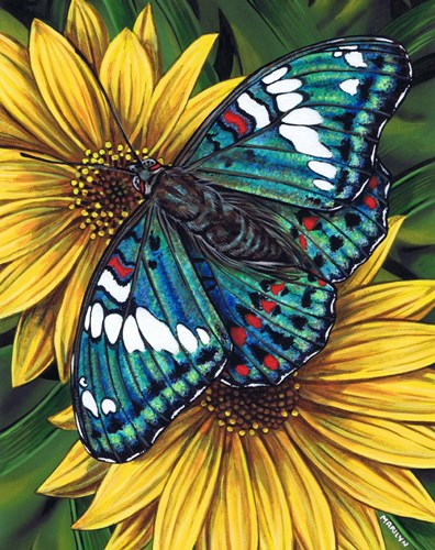 Gaudy Baron Butterfly art print by Marilyn Barkhouse for $35.00 CAD