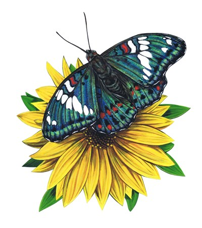Gaudy Baron Butterfly-II art print by Marilyn Barkhouse for $62.50 CAD