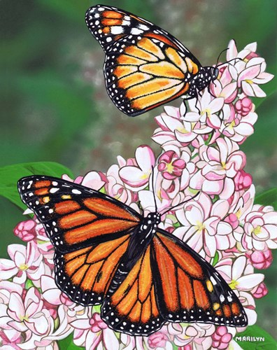 Monarch Butterfly art print by Marilyn Barkhouse for $35.00 CAD