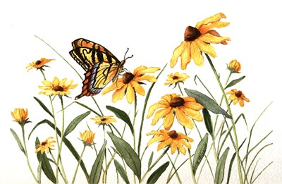 Butterfly & Black Eyed Susans art print by Maureen Mccarthy for $28.75 CAD