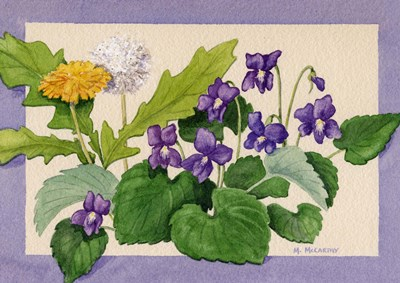 Dandelion And Violets art print by Maureen Mccarthy for $28.75 CAD