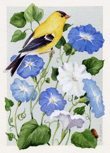 Goldfinch And Morning Glories art print by Maureen Mccarthy for $40.00 CAD