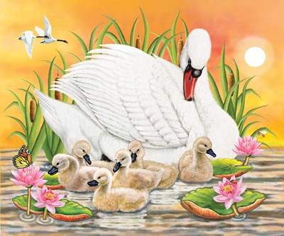 Mother Swan At Sunset art print by Rosiland Solomon for $41.25 CAD