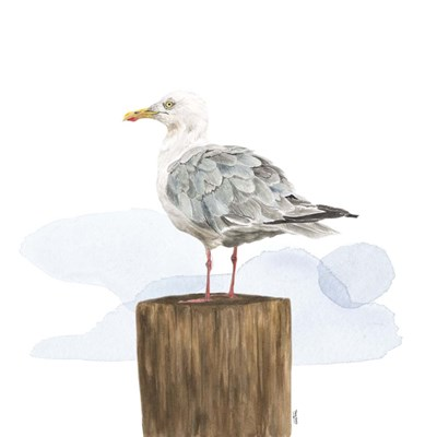 Birds of the Coast on White IV art print by Tara Reed for $53.75 CAD