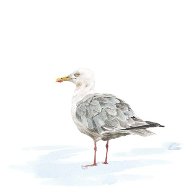 Birds of the Coast on White VI art print by Tara Reed for $53.75 CAD
