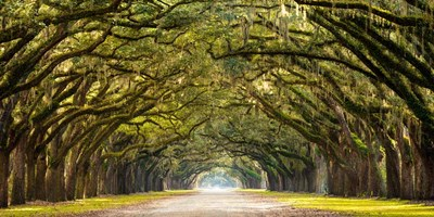Path Lined with Oak Trees art print by Unknown for $81.25 CAD