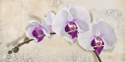 Royal Orchid art print by Elena Dolci for $50.00 CAD