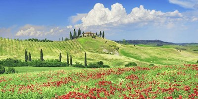 Farmhouse with Cypresses and Poppies, Val d'Orcia, Tuscany art print by Frank Krahmer for $50.00 CAD
