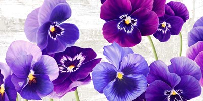Dance of Pansies art print by Jenny Thomlinson for $50.00 CAD