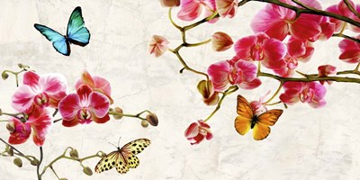 Orchids & Butterflies art print by Teo Rizzardi for $50.00 CAD