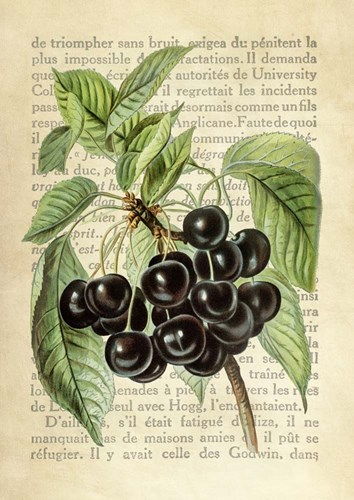 Cherries, After J. Wright art print by Remy Dellal for $40.00 CAD