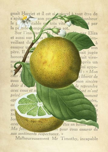 Grapefruit, After Redoute art print by Remy Dellal for $40.00 CAD