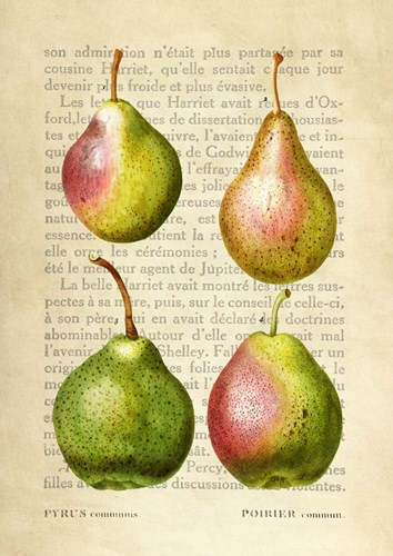 Pears, After Redoute art print by Remy Dellal for $40.00 CAD