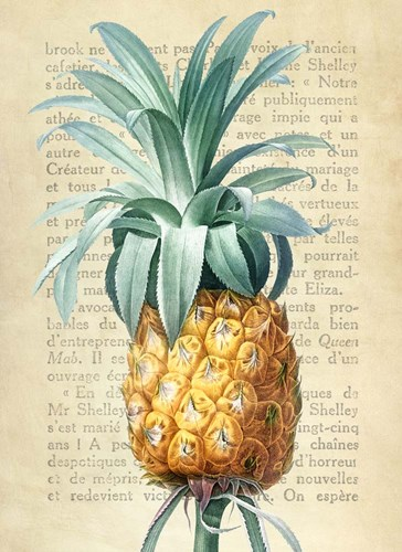 Pineapple, After Redoute art print by Remy Dellal for $40.00 CAD