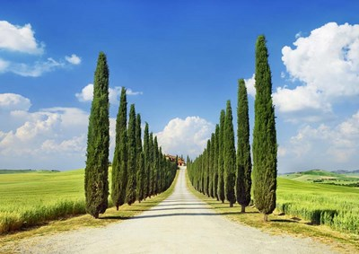 Cypress alley, San Quirico d'Orcia, Tuscany art print by Frank Krahmer for $61.25 CAD