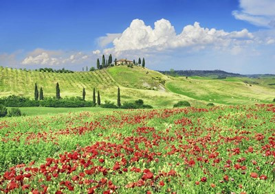 Farmhouse with Cypresses and Poppies, Val d'Orcia, Tuscany art print by Frank Krahmer for $61.25 CAD