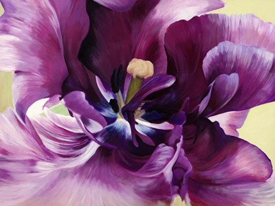Purple Tulip Close-up art print by Luca Villa for $63.75 CAD