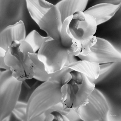 Orchids - B&W art print by Collin Bogle for $48.75 CAD