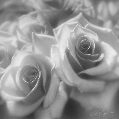 Rose Pair B&W art print by Collin Bogle for $48.75 CAD