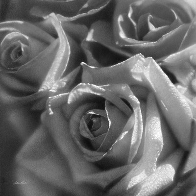 Rose Pedals B&W art print by Collin Bogle for $48.75 CAD