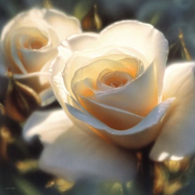 White Rose - Colors of White - Square art print by Collin Bogle for $48.75 CAD