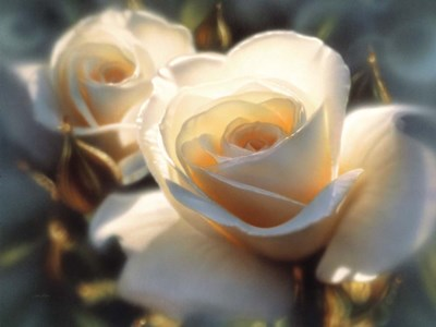 White Roses - Colors of White art print by Collin Bogle for $41.25 CAD