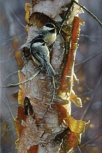 Black-Capped Chickadees - Sunlit Birch art print by Collin Bogle for $43.75 CAD