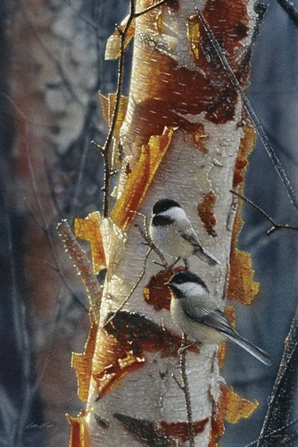 Black-Capped Chickadees - Sunlit Birch II art print by Collin Bogle for $43.75 CAD