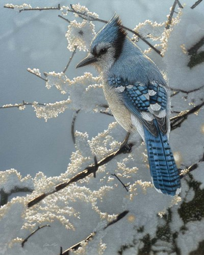 Blue Jay - On the Fence art print by Collin Bogle for $40.00 CAD