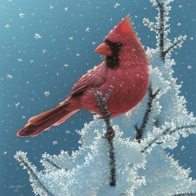 Cardinal - Cherry on Top art print by Collin Bogle for $48.75 CAD