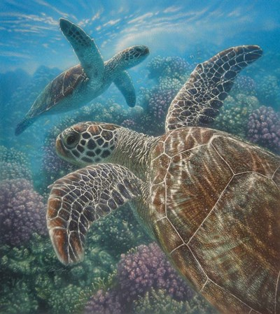 Sea Turtles - Turtle Bay art print by Collin Bogle for $37.50 CAD