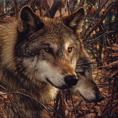 Autumn Wolves art print by Collin Bogle for $48.75 CAD