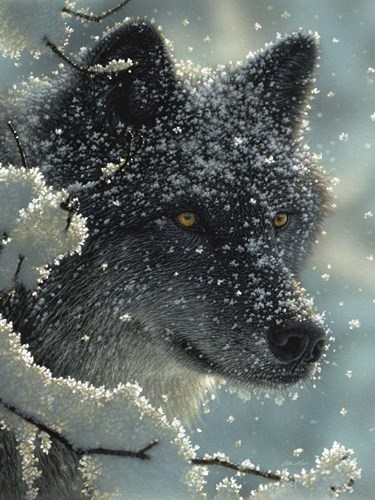 Black Wolf - Black in White art print by Collin Bogle for $41.25 CAD