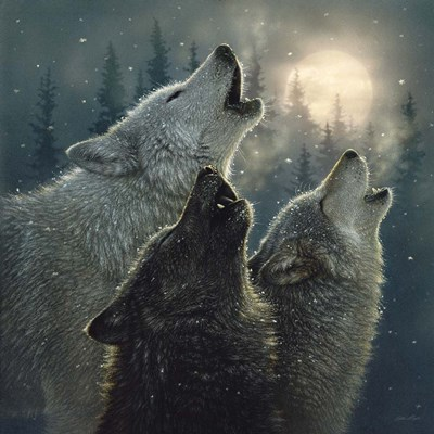 Howling Wolves - In Harmony art print by Collin Bogle for $48.75 CAD